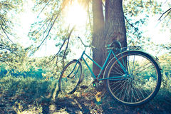 Bicycle  in the forest under the sun. Royalty Free Stock Photo