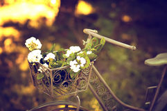 Bicycle  in a garden. Royalty Free Stock Photography