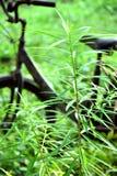 Bicycle garden green Stock Photos