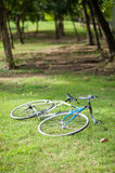 Bicycle on the garden Stock Image