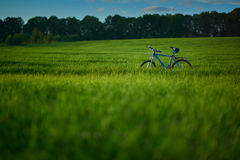 Bicycle on grass field in the morning. Blue modern bicycle on grass field in the morning at the sunrise Stock Photos