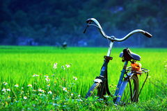 A bicycle on green fields Stock Photo