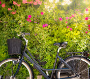 Bicycle with green flower wall in background Stock Photos