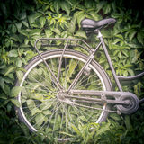 Bicycle with green foiage in background Royalty Free Stock Photos