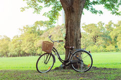Bicycle on green grass under tree. In park in park, outdoor Royalty Free Stock Photos