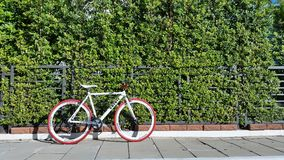 Bicycle. At green wall Stock Photography