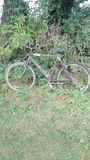 Bicycle in a Hedgerow Royalty Free Stock Photo