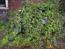Bicycle hidden by a plant Royalty Free Stock Image