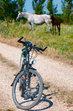 Bicycle and horses Royalty Free Stock Photography