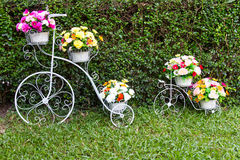 Bicycle inventor flowers Royalty Free Stock Photo
