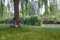 Bicycle in an italian garden Royalty Free Stock Image