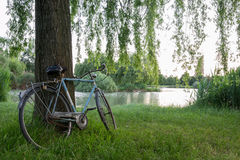 Bicycle in an italian garden Stock Image