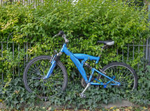 Bicycle With Ivy Stock Photography
