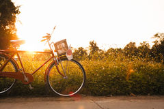 Bicycle with japan flag on the road with flower of green grasses Stock Image