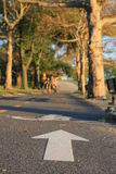 Bicycle lane in the autumn Brooklyn park. Bicycle lane in the autumn park close to the Verrazano-Narrows Bridge , The largest and longest bridge in New York City royalty free stock photo
