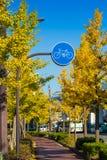 Bicycle lane, Stock Photo