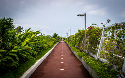 Bicycle lane and a jogging path surrounded by green in Cinta Costera - Panama City, Panama Stock Photo