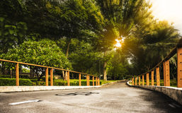 Bicycle lane in the park. With beautiful light ray in the morning Royalty Free Stock Images