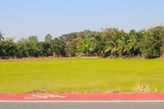 Bicycle lane in rural. Of Supanburi,Thailand.Rice farm background Royalty Free Stock Photos