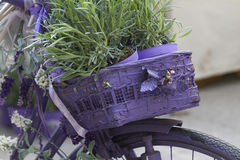 Bicycle with lavender Royalty Free Stock Photos