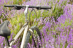Bicycle on a lavender field Stock Photos