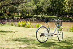 Bicycle on the lawn. Bicycle on the green lawn.JPG Stock Image