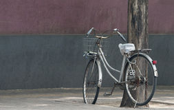 Bicycle Leaning Against Tree Royalty Free Stock Images