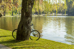 Bicycle left near a tree Royalty Free Stock Images