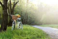 Bicycle leisure in nature Royalty Free Stock Image