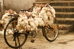 Bicycle Loaded With Chickens Royalty Free Stock Photo