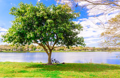 A bicycle and a man lays down under the tree Stock Photos