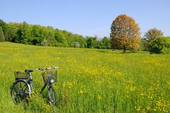 Bicycle in a meadow Royalty Free Stock Photo