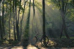 Bicycle Stock Image