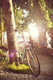 Bicycle near the palm tree Royalty Free Stock Image