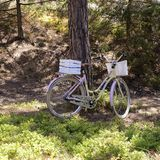 Sweden Stockholm, 24 July 2018: Bicycle near a tree in summer forest. Bicycle near a tree in summer forest stock photo