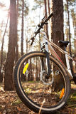 Bicycle near a tree in summer or spring forest Royalty Free Stock Images