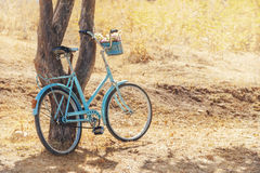 Bicycle near tree Royalty Free Stock Images