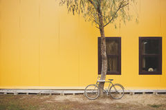Bicycle near a yellow wall. Bicycle near a tree against yellow wall Royalty Free Stock Photos