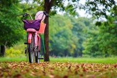 Bicycle no jardim Imagens de Stock