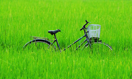Bicycle in paddy rice field Stock Photos