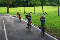 Bicycle in park. Path through the landscaped with bicycle Stock Image