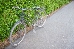 Bicycle in the park. Stock Image