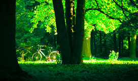 Bicycle in park. Bicycle parked in a forest in summer Stock Images