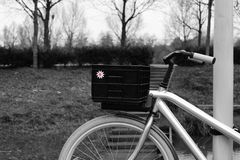 Bicycle at the park royalty free stock images