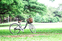 Bicycle in park. Bicycle in the green park Stock Photography