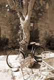 Bicycle parked against a tree. A bicycle parked against a tree outside a cafe Stock Photo