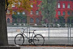 Bicycle parked near a tree in autumn. Old building with red ivy on the facade in the background. Wroclaw, Poland Royalty Free Stock Image
