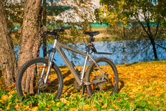 Bicycle is parked near the tree in autumn park Stock Photo