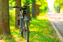 Bicycle parked near a tree Stock Image