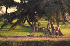 Bicycle parked the paddy field. Royalty Free Stock Images